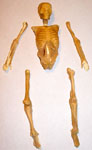 Covered Skeleton