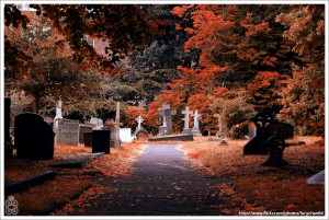 Autumn Morgue