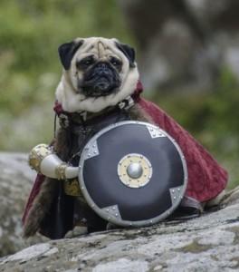 Boromir Pug