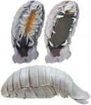 Isopod Phone Case